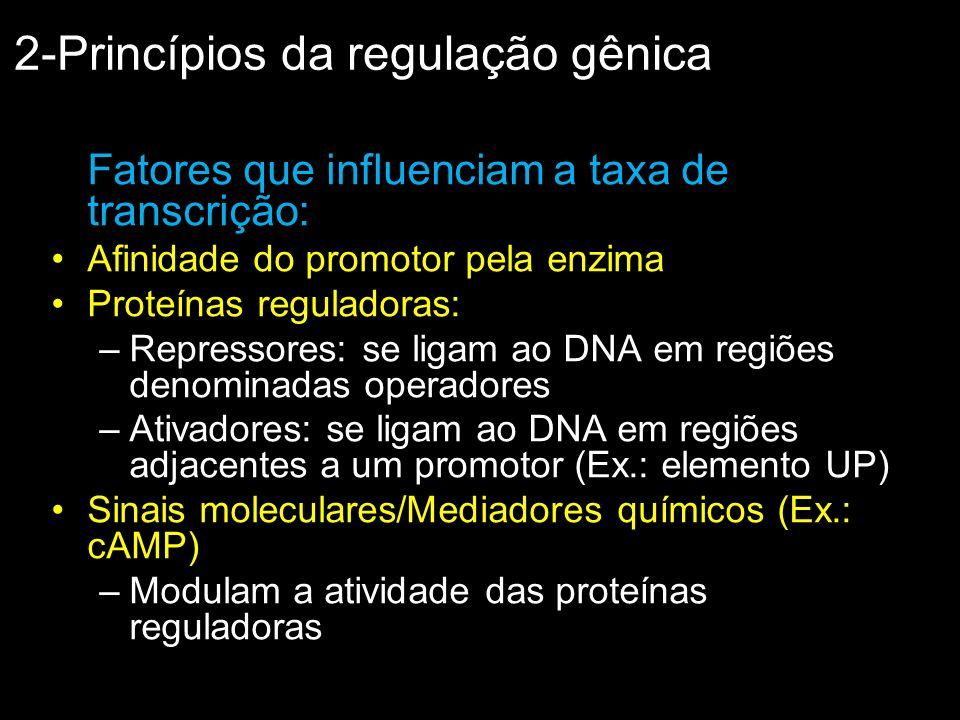 Fatores que influenciam a taxa de transcrição: Afinidade do promotor pela enzima Proteínas reguladoras: –Repressores: se ligam ao DNA em regiões denom
