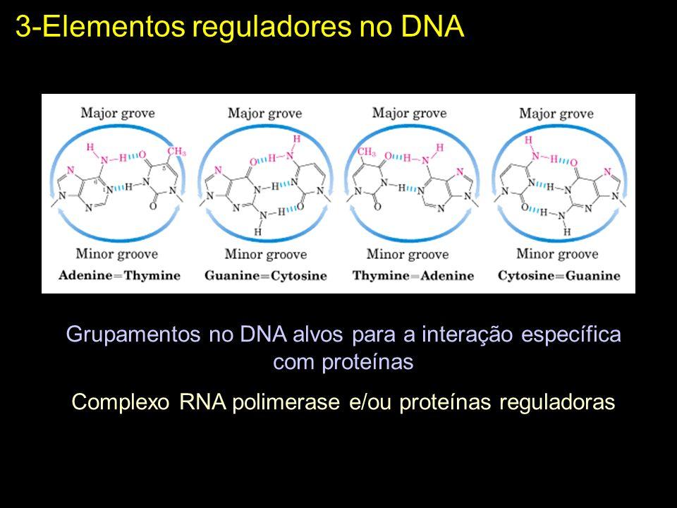 3-Elementos reguladores no DNA Grupamentos no DNA alvos para a interação específica com proteínas Complexo RNA polimerase e/ou proteínas reguladoras