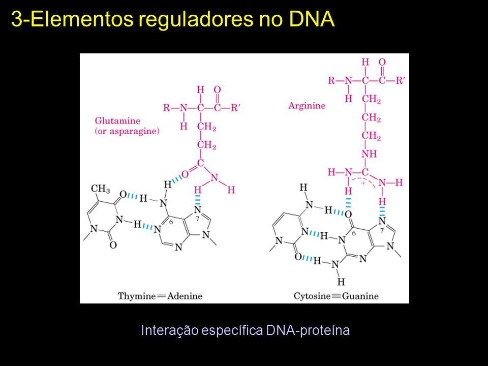 Interação específica DNA-proteína 3-Elementos reguladores no DNA