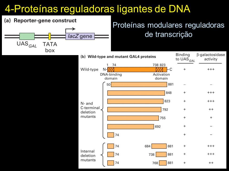 4-Proteínas reguladoras ligantes de DNA Proteínas modulares reguladoras de transcrição