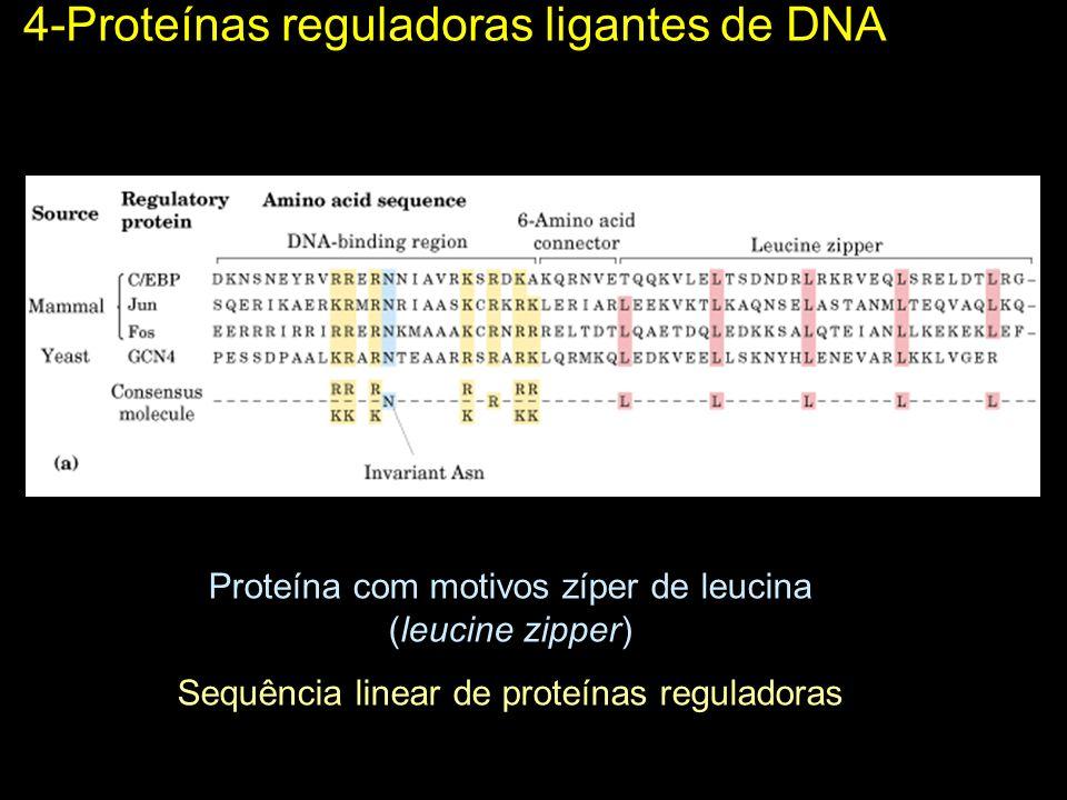 4-Proteínas reguladoras ligantes de DNA Proteína com motivos zíper de leucina (leucine zipper) Sequência linear de proteínas reguladoras