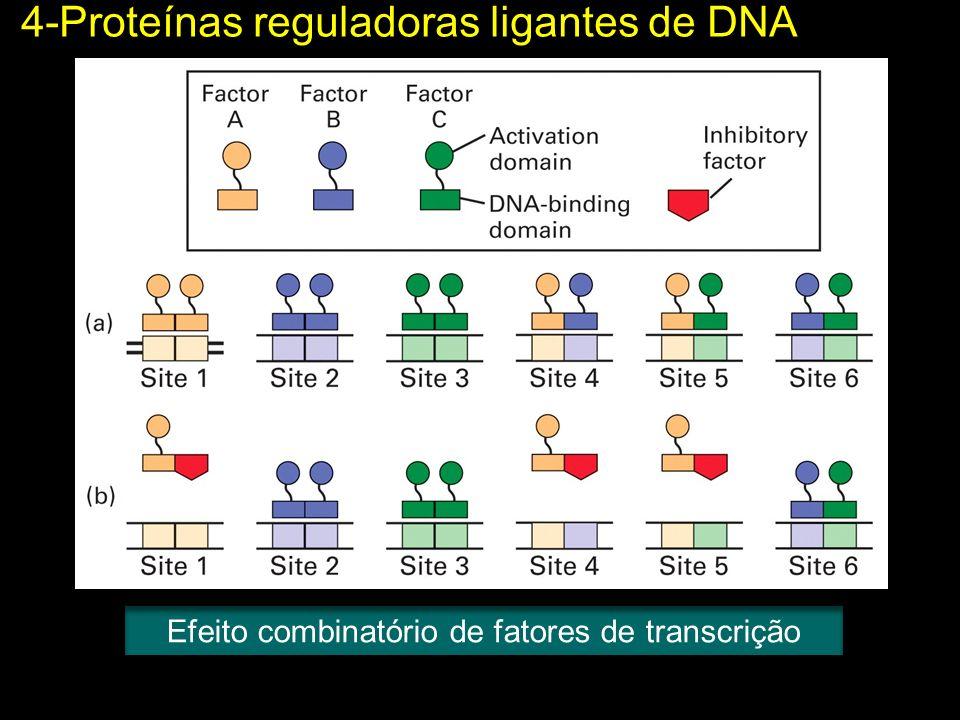 4-Proteínas reguladoras ligantes de DNA Efeito combinatório de fatores de transcrição