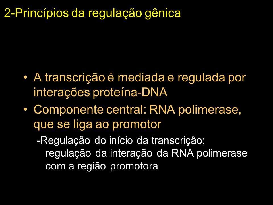 2-Princípios da regulação gênica A transcrição é mediada e regulada por interações proteína-DNA Componente central: RNA polimerase, que se liga ao pro