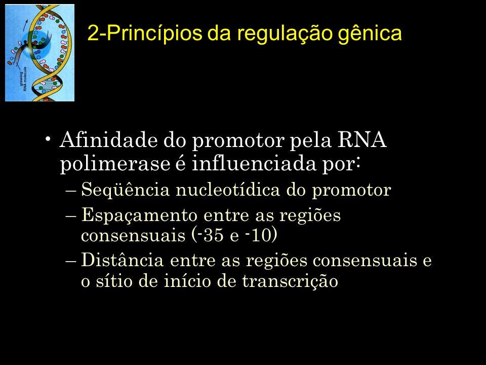 Afinidade do promotor pela RNA polimerase é influenciada por: –Seqüência nucleotídica do promotor –Espaçamento entre as regiões consensuais (-35 e -10