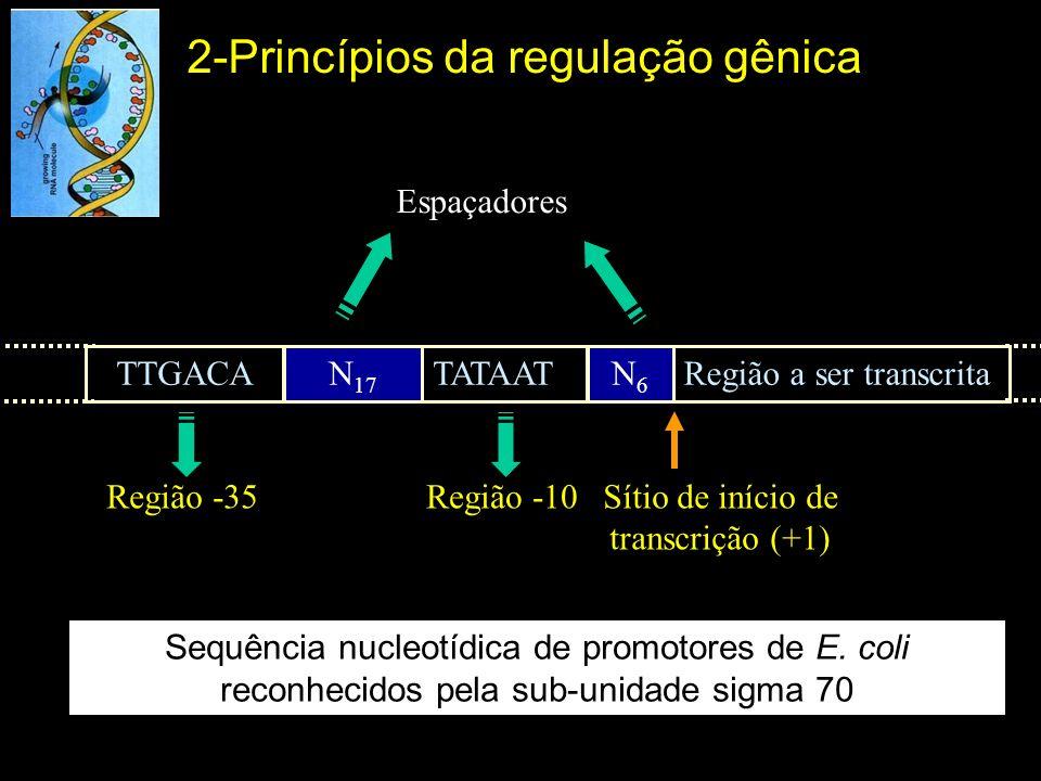 Sequência nucleotídica de promotores de E. coli reconhecidos pela sub-unidade sigma 70 Região -35 TTGACAN 17 TATAATN6N6 Região a ser transcrita Região