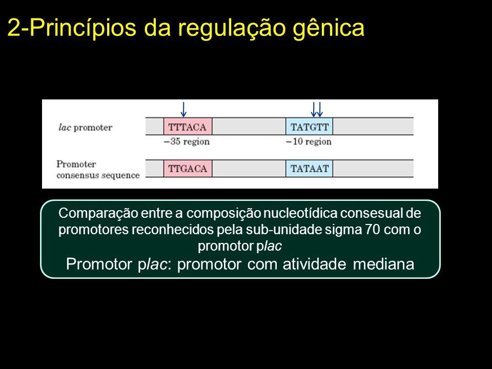 Comparação entre a composição nucleotídica consesual de promotores reconhecidos pela sub-unidade sigma 70 com o promotor plac Promotor plac: promotor
