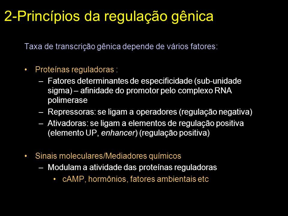 Taxa de transcrição gênica depende de vários fatores: Proteínas reguladoras : –Fatores determinantes de especificidade (sub-unidade sigma) – afinidade