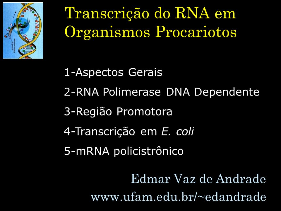 Transcrição do RNA em Organismos Procariotos Edmar Vaz de Andrade www.ufam.edu.br/~edandrade 1-Aspectos Gerais 2-RNA Polimerase DNA Dependente 3-Regiã