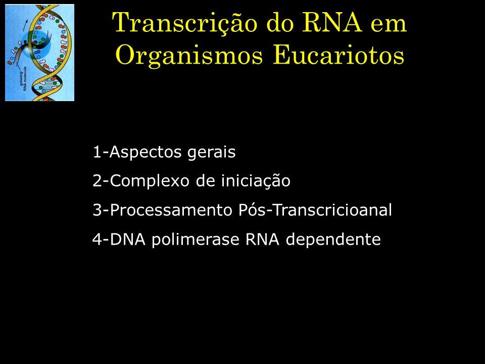 Transcrição do RNA em Organismos Eucariotos 1-Aspectos gerais 2-Complexo de iniciação 3-Processamento Pós-Transcricioanal 4-DNA polimerase RNA depende