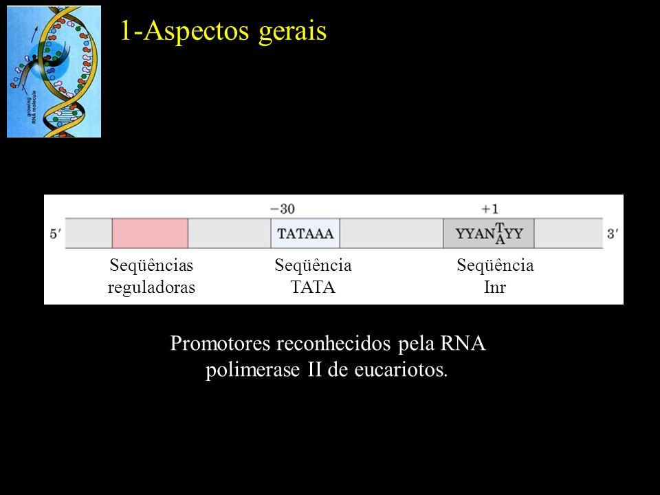 Promotores reconhecidos pela RNA polimerase II de eucariotos. Seqüências reguladoras Seqüência TATA Seqüência Inr 1-Aspectos gerais