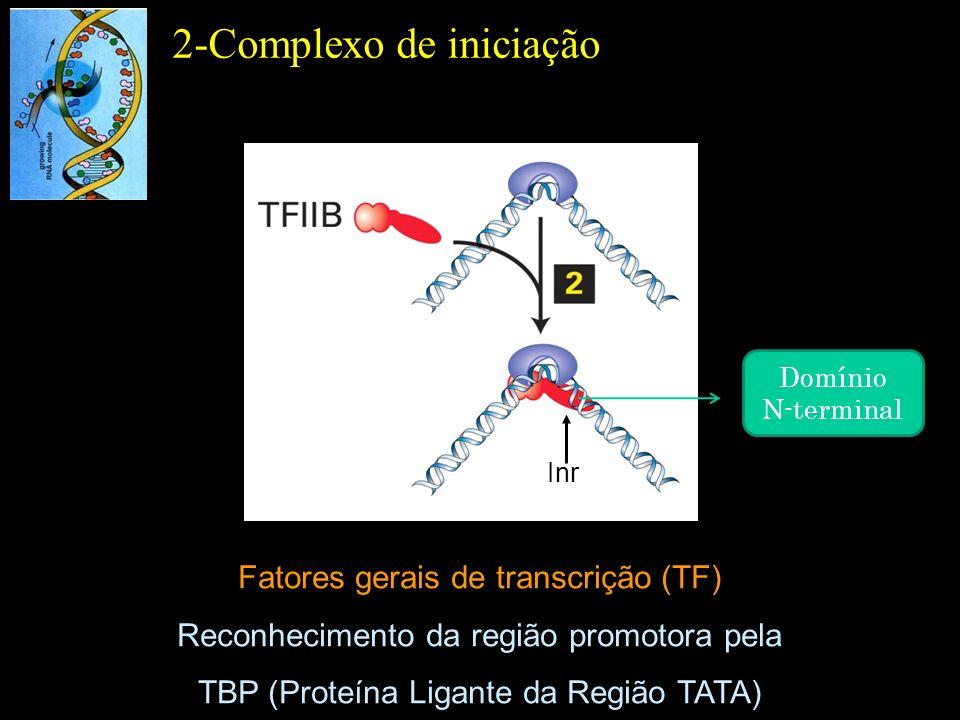 Fatores gerais de transcrição (TF) Reconhecimento da região promotora pela TBP (Proteína Ligante da Região TATA) 2-Complexo de iniciação Inr Domínio N