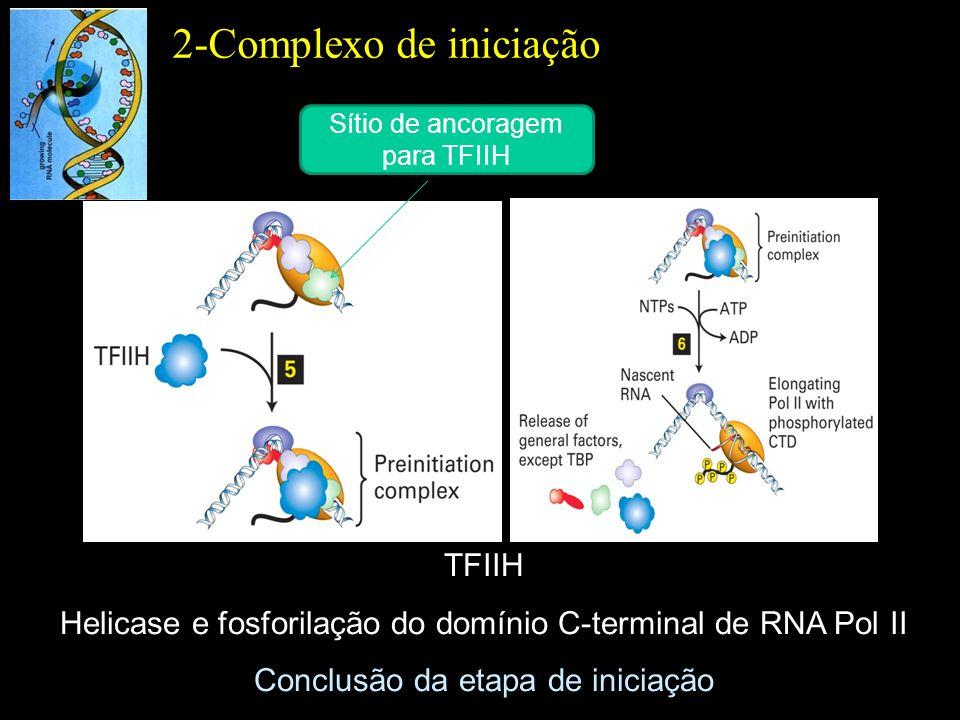TFIIH Helicase e fosforilação do domínio C-terminal de RNA Pol II Conclusão da etapa de iniciação 2-Complexo de iniciação Sítio de ancoragem para TFII