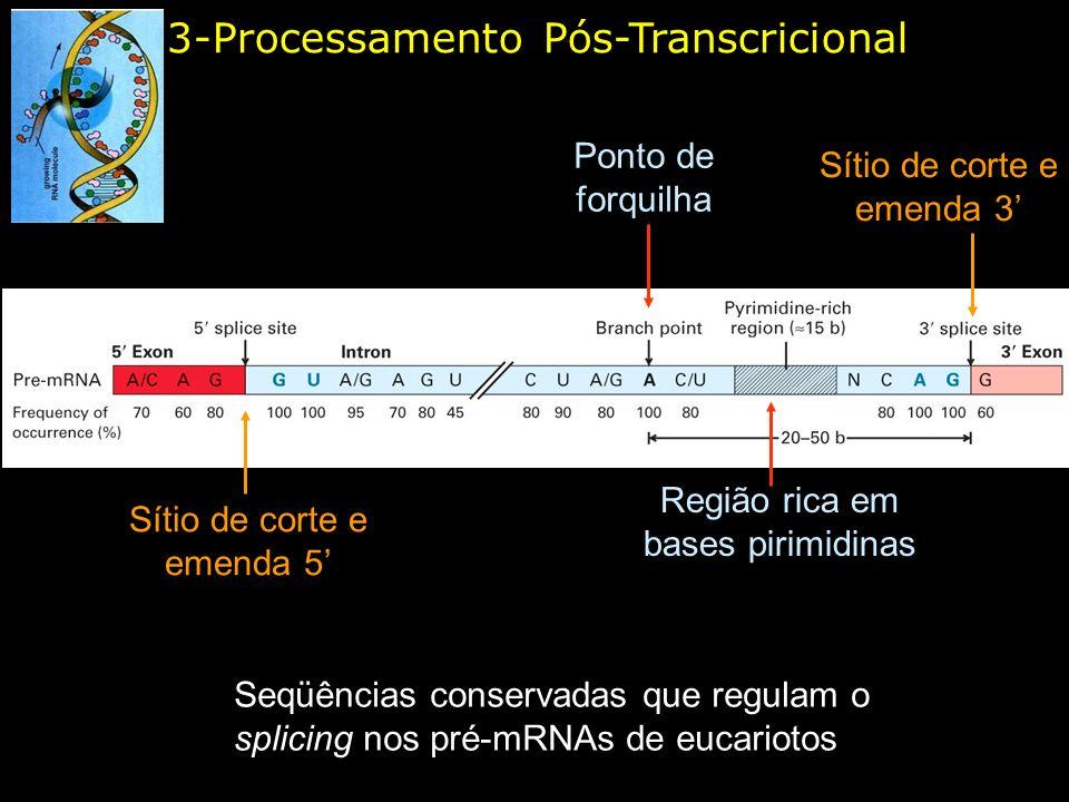 3-Processamento Pós-Transcricional Seqüências conservadas que regulam o splicing nos pré-mRNAs de eucariotos Sítio de corte e emenda 3 Sítio de corte