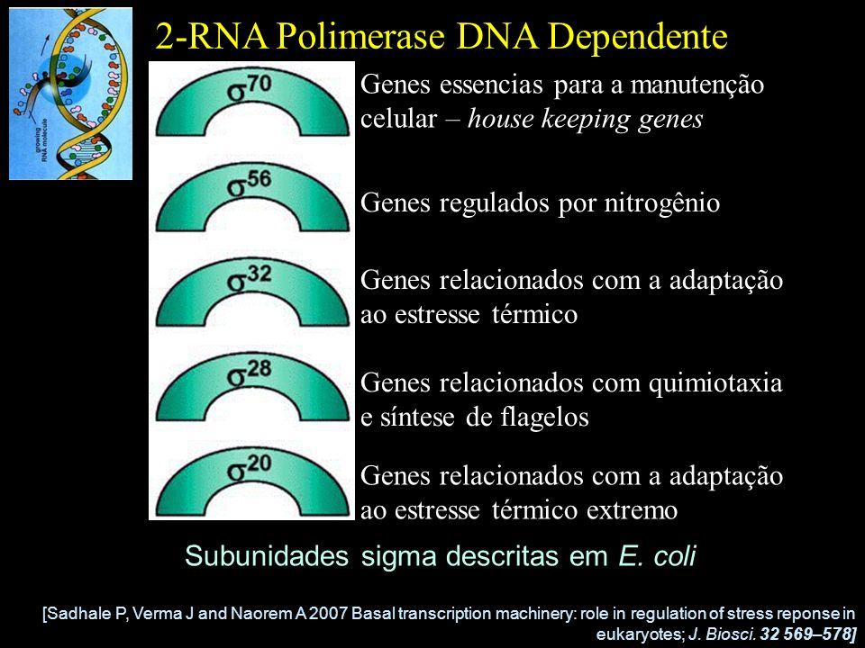 3-Região Promotora Eficiência da ligação da RNA polimerase ao promotor –Sequência nucleotídica do promotor –Espaçamento entre as regiões -10 e -35 –Distância entre as regiões -10 e -35 e o sítio de início de transcrição