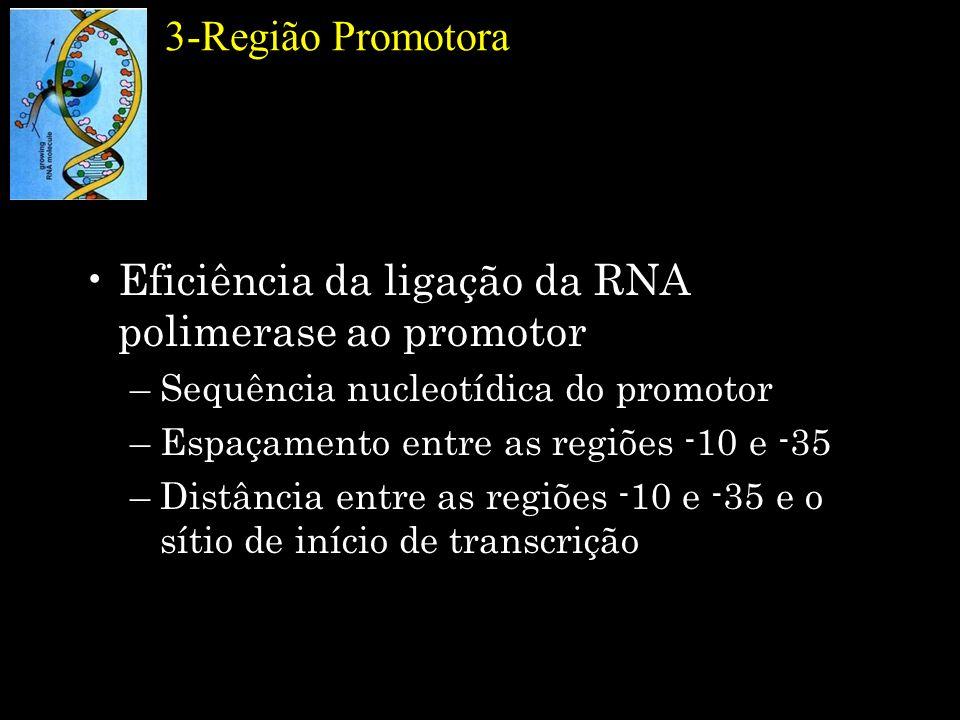 3-Região Promotora Eficiência da ligação da RNA polimerase ao promotor –Sequência nucleotídica do promotor –Espaçamento entre as regiões -10 e -35 –Di