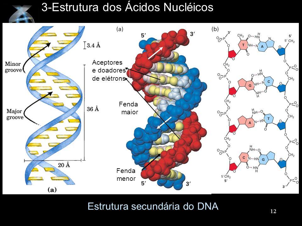 3-Estrutura dos Ácidos Nucléicos Estrutura secundária do DNA Fenda maior Fenda menor Aceptores e doadores de elétrons 12