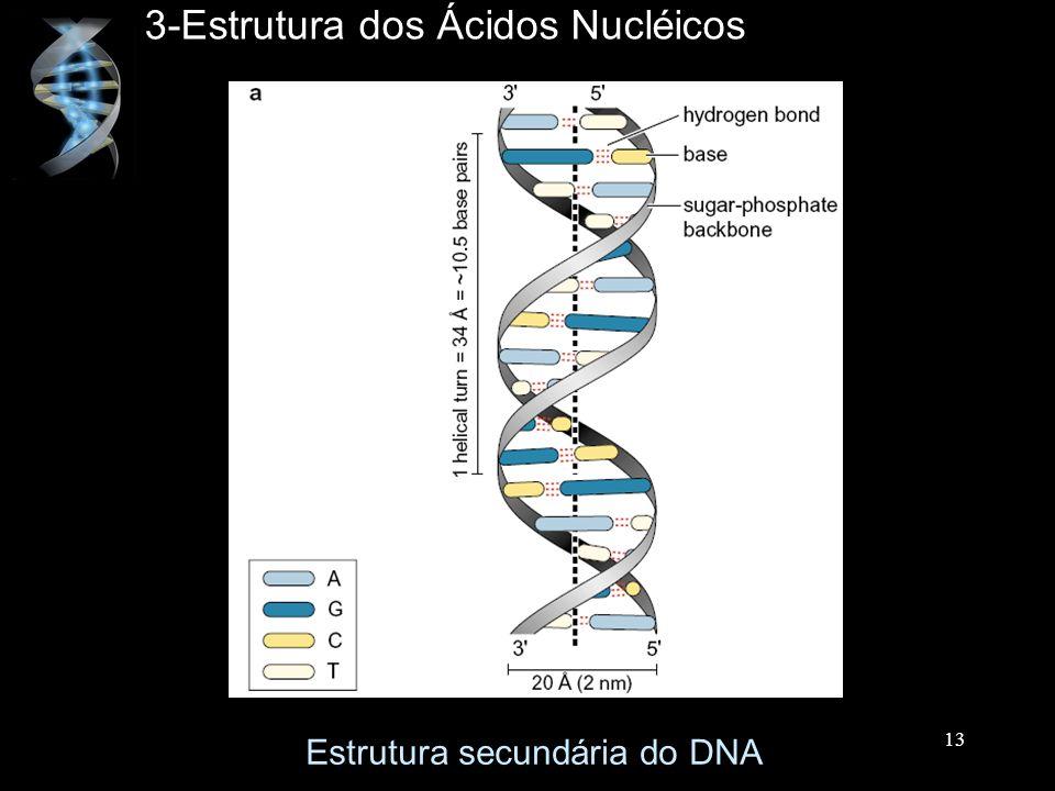 3-Estrutura dos Ácidos Nucléicos Estrutura secundária do DNA 13