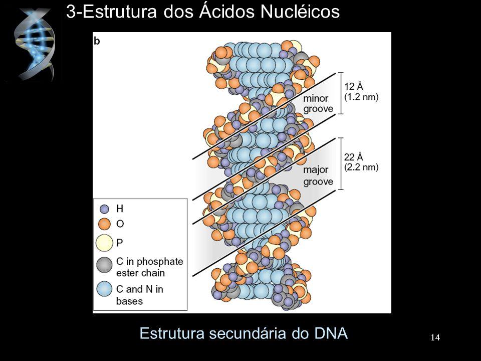 3-Estrutura dos Ácidos Nucléicos Estrutura secundária do DNA 14