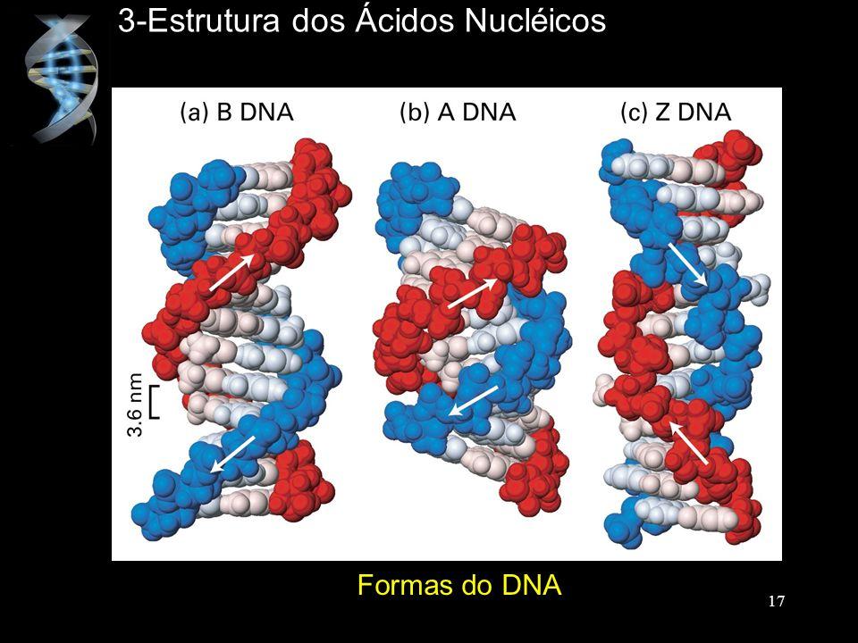 3-Estrutura dos Ácidos Nucléicos Formas do DNA 17