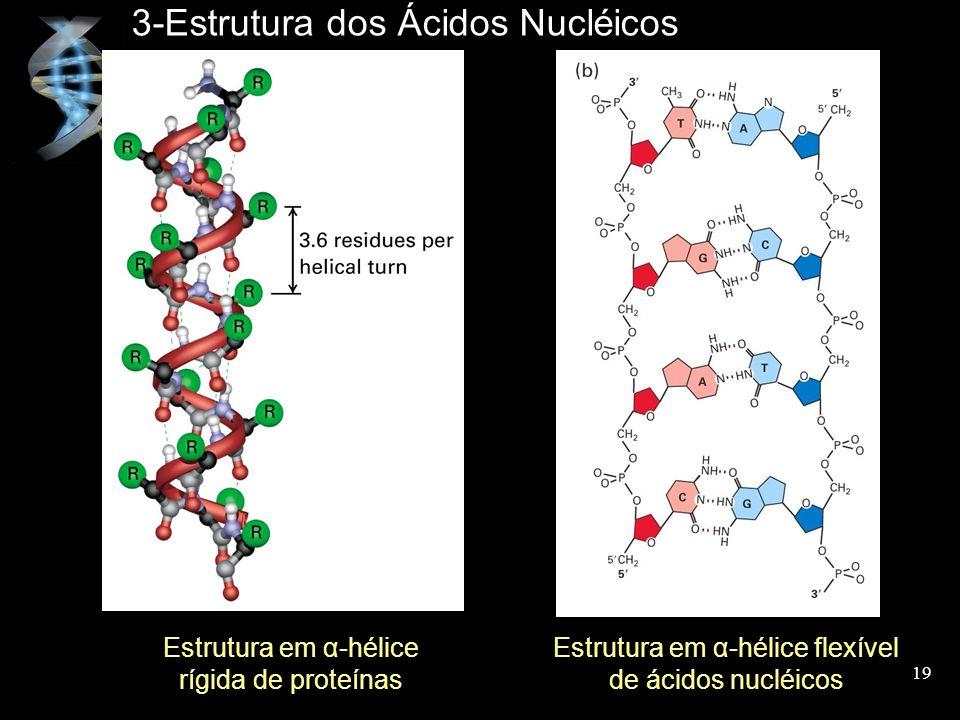 3-Estrutura dos Ácidos Nucléicos Estrutura em α-hélice rígida de proteínas Estrutura em α-hélice flexível de ácidos nucléicos 19