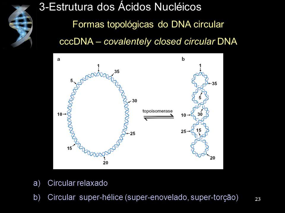 3-Estrutura dos Ácidos Nucléicos Formas topológicas do DNA circular cccDNA – covalentely closed circular DNA 23 a)Circular relaxado b)Circular super-h
