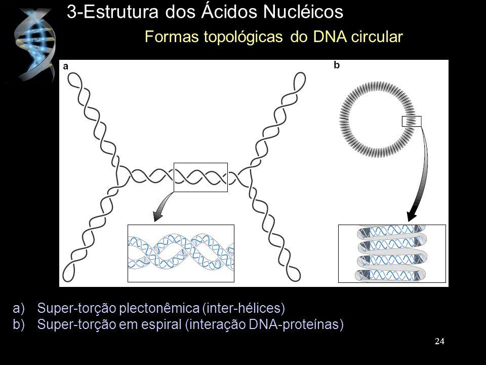 3-Estrutura dos Ácidos Nucléicos Formas topológicas do DNA circular a)Super-torção plectonêmica (inter-hélices) b)Super-torção em espiral (interação D