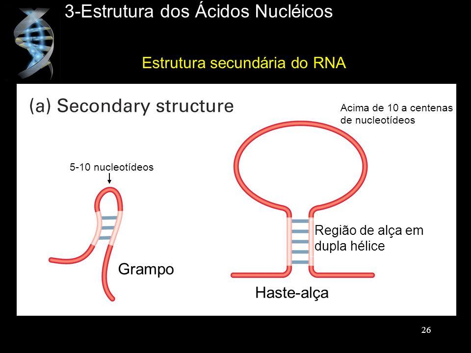 3-Estrutura dos Ácidos Nucléicos Estrutura secundária do RNA Grampo Haste-alça Região de alça em dupla hélice 5-10 nucleotídeos Acima de 10 a centenas