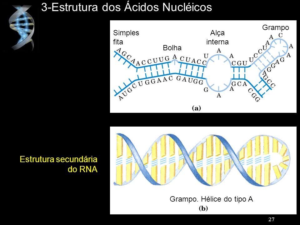 3-Estrutura dos Ácidos Nucléicos Estrutura secundária do RNA Simples fita Bolha Alça interna Grampo Grampo. Hélice do tipo A 27