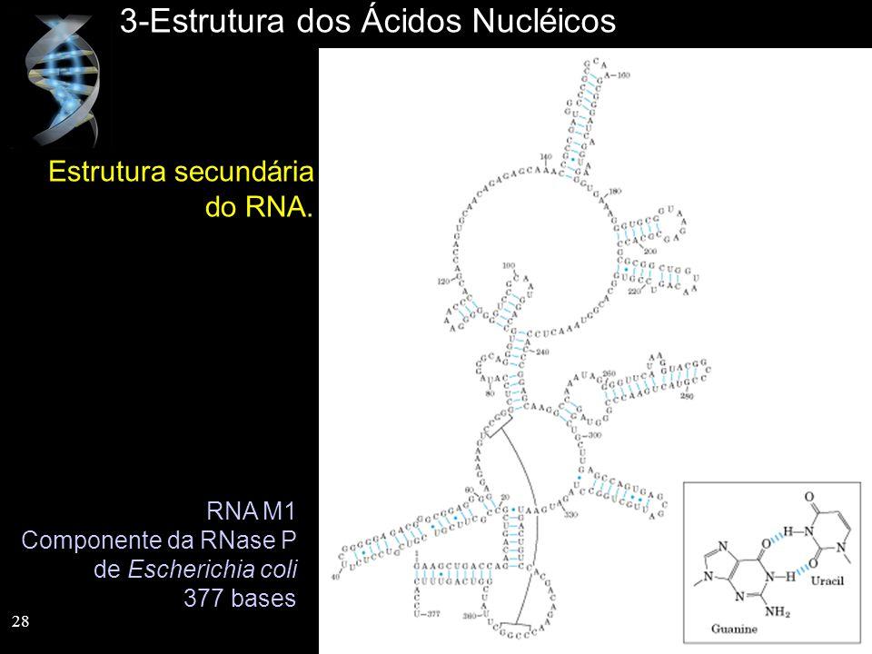 3-Estrutura dos Ácidos Nucléicos Estrutura secundária do RNA. RNA M1 Componente da RNase P de Escherichia coli 377 bases 28