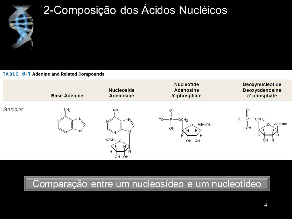 Comparação entre um nucleosídeo e um nucleotídeo 2-Composição dos Ácidos Nucléicos 4