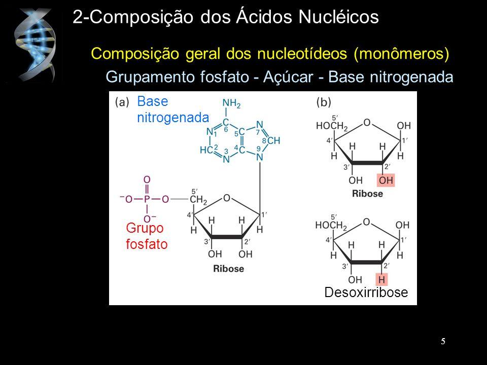 Composição geral dos nucleotídeos (monômeros) Grupamento fosfato - Açúcar - Base nitrogenada 2-Composição dos Ácidos Nucléicos Base nitrogenada Grupo