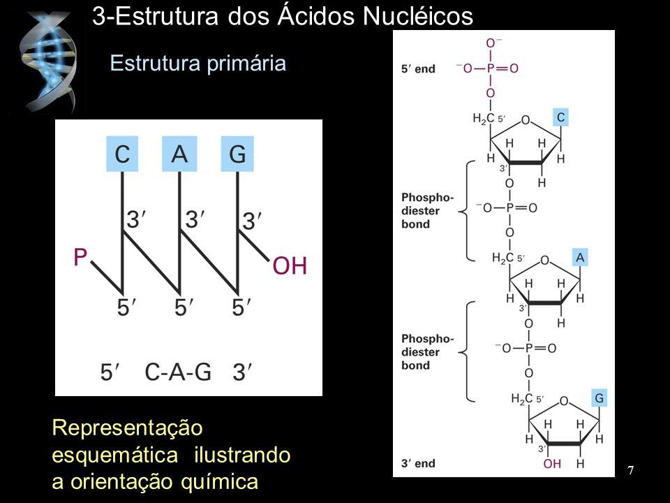 3-Estrutura dos Ácidos Nucléicos Estrutura primária Representação esquemática ilustrando a orientação química 7