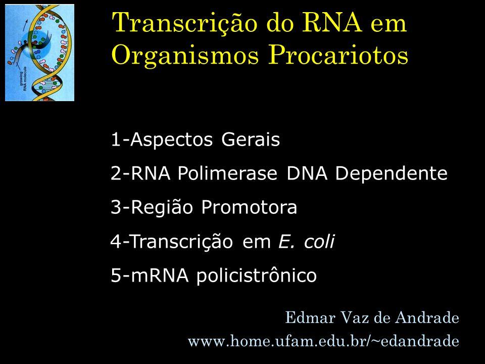 Transcrição do RNA em Organismos Procariotos Edmar Vaz de Andrade www.home.ufam.edu.br/~edandrade 1-Aspectos Gerais 2-RNA Polimerase DNA Dependente 3-