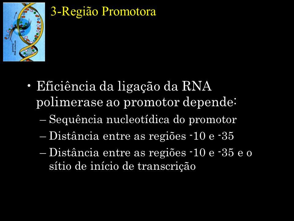 Eficiência da ligação da RNA polimerase ao promotor depende: –Sequência nucleotídica do promotor –Distância entre as regiões -10 e -35 –Distância entr