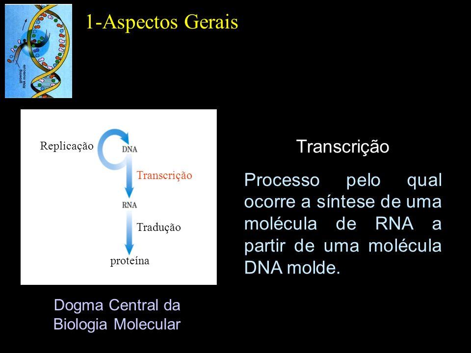 Dogma Central da Biologia Molecular 1-Aspectos Gerais Transcrição Processo pelo qual ocorre a síntese de uma molécula de RNA a partir de uma molécula