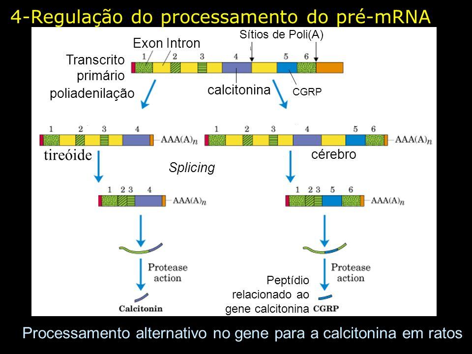 4-Regulação do processamento do pré-mRNA Processamento alternativo no gene para a calcitonina em ratos Peptídio relacionado ao gene calcitonina Exon I