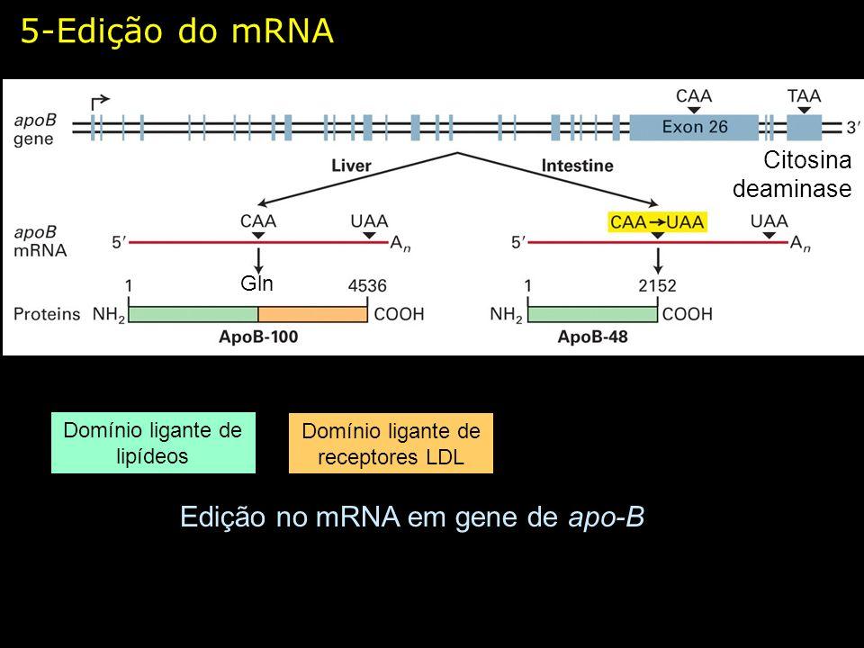 5-Edição do mRNA Edição no mRNA em gene de apo-B Domínio ligante de lipídeos Domínio ligante de receptores LDL Citosina deaminase Gln