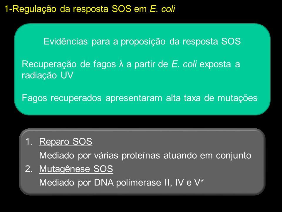 1-Regulação da resposta SOS em E. coli Evidências para a proposição da resposta SOS Recuperação de fagos λ a partir de E. coli exposta a radiação UV F