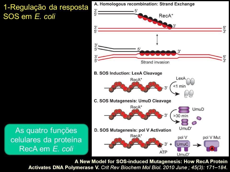 1-Regulação da resposta SOS em E. coli A New Model for SOS-induced Mutagenesis: How RecA Protein Activates DNA Polymerase V. Crit Rev Biochem Mol Biol