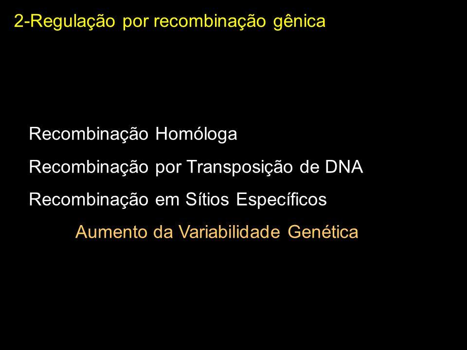 2-Regulação por recombinação gênica Recombinação em Sítios Específicos Envolve a participação de recombinases Repetições Invertidas