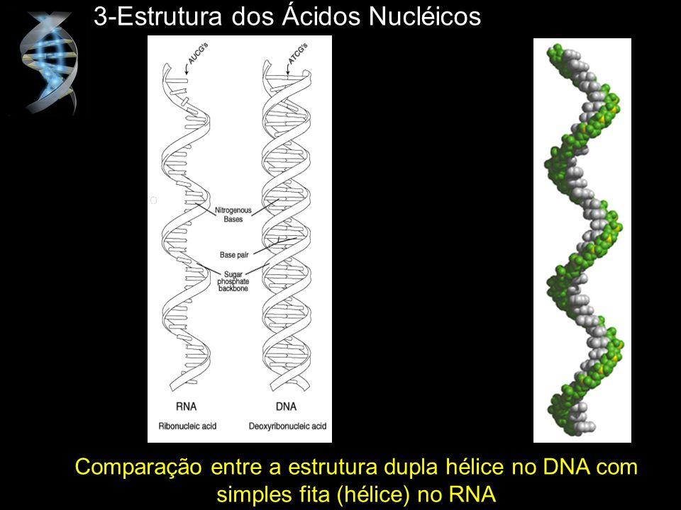 3-Estrutura dos Ácidos Nucléicos Comparação entre a estrutura dupla hélice no DNA com simples fita (hélice) no RNA