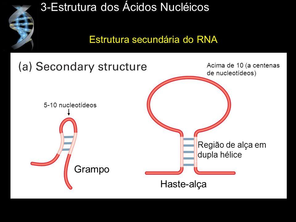 3-Estrutura dos Ácidos Nucléicos Estrutura secundária do RNA Grampo Haste-alça Região de alça em dupla hélice 5-10 nucleotídeos Acima de 10 (a centena