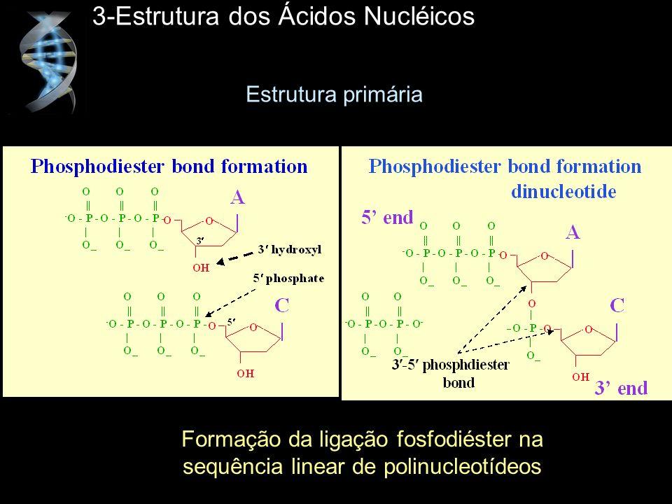3-Estrutura dos Ácidos Nucléicos Formação da ligação fosfodiéster na sequência linear de polinucleotídeos Estrutura primária