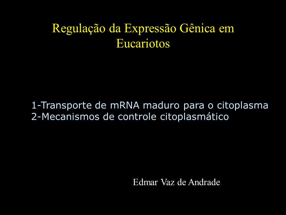 Regulação da Expressão Gênica em Eucariotos Edmar Vaz de Andrade 1-Transporte de mRNA maduro para o citoplasma 2-Mecanismos de controle citoplasmático