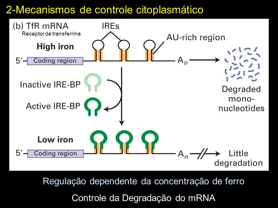 2-Mecanismos de controle citoplasmático Regulação dependente da concentração de ferro Controle da Degradação do mRNA Receptor de transferrina