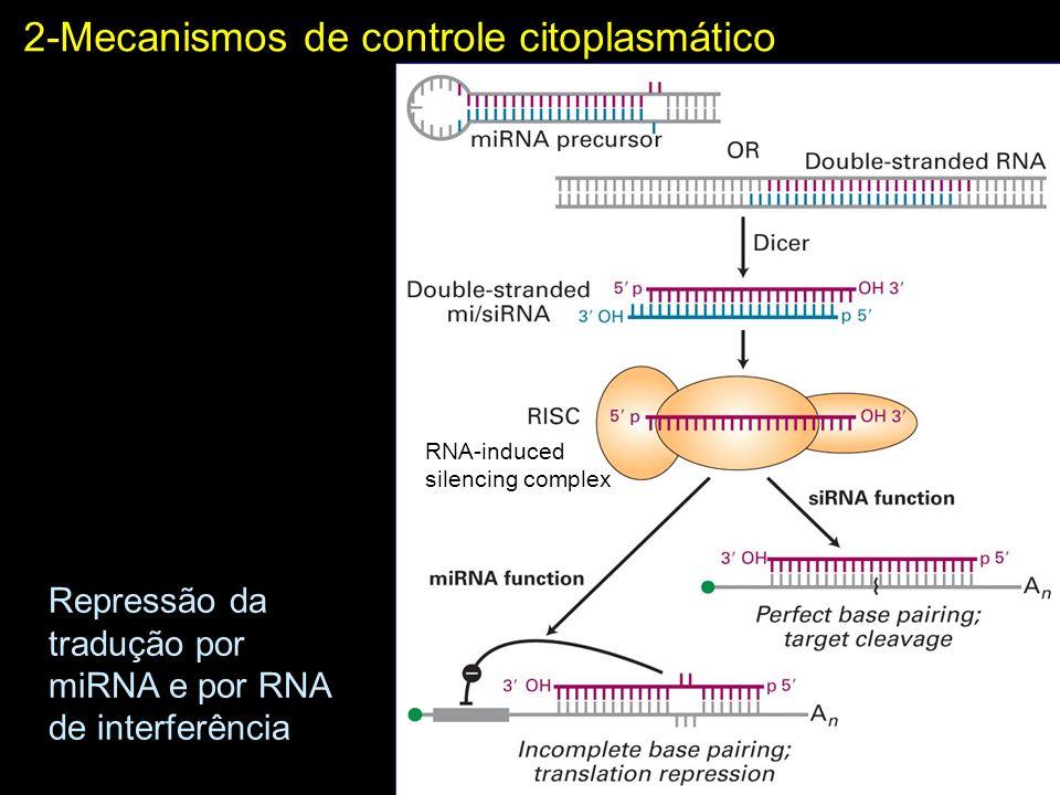 2-Mecanismos de controle citoplasmático Repressão da tradução por miRNA e por RNA de interferência RNA-induced silencing complex
