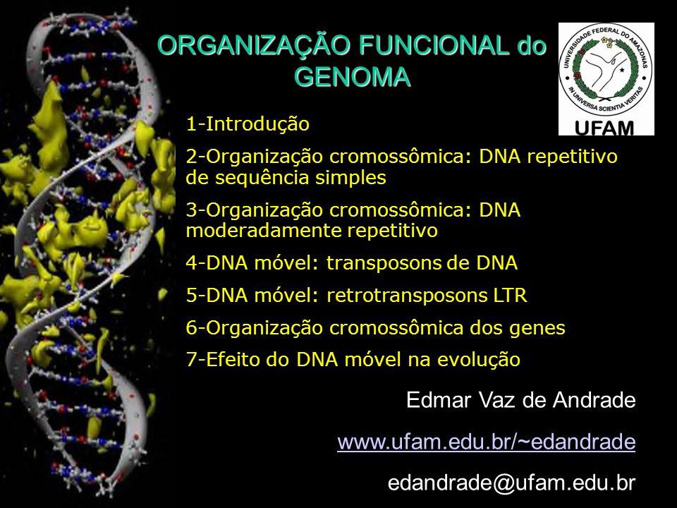 ORGANIZAÇÃO FUNCIONAL do GENOMA 1-Introdução 2-Organização cromossômica: DNA repetitivo de sequência simples 3-Organização cromossômica: DNA moderadamente repetitivo 4-DNA móvel: transposons de DNA 5-DNA móvel: retrotransposons LTR 6-Organização cromossômica dos genes 7-Efeito do DNA móvel na evolução Edmar Vaz de Andrade www.ufam.edu.br/~edandrade edandrade@ufam.edu.br