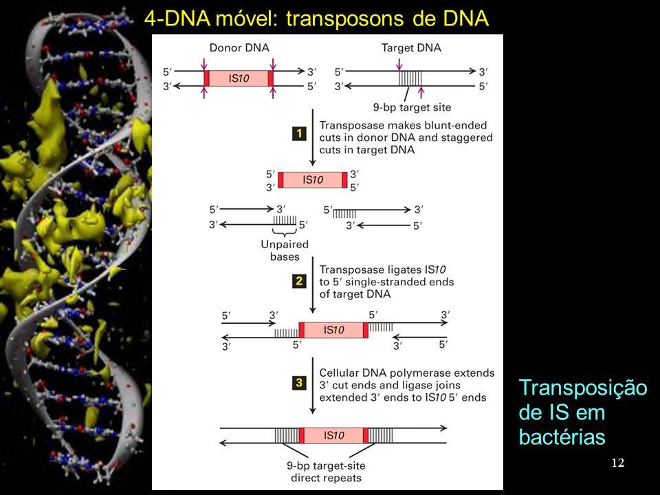 Transposição de IS em bactérias 4-DNA móvel: transposons de DNA 12