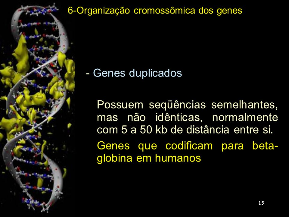 - Genes duplicados -Possuem seqüências semelhantes, mas não idênticas, normalmente com 5 a 50 kb de distância entre si. -Genes que codificam para beta