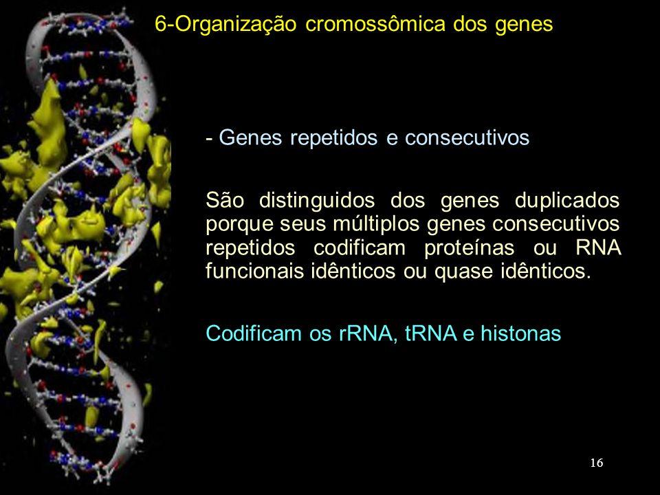- Genes repetidos e consecutivos -São distinguidos dos genes duplicados porque seus múltiplos genes consecutivos repetidos codificam proteínas ou RNA funcionais idênticos ou quase idênticos.